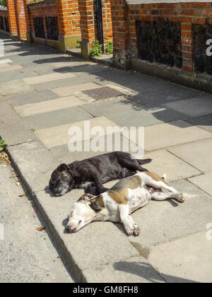 Two dogs sleeping on the pavement in the heat of the day - Stock Photo