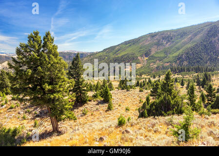 Landscape of hills and forests in Yellowstone National Park - Stock Photo