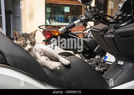 sleeping streetcat - Stock Photo