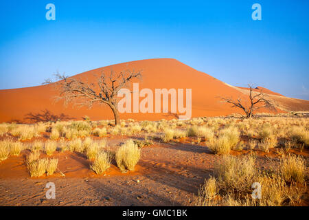 Dune 45 the star dune composed of 5 million year old sand Sossusvlei Namib Desert Naukluft National Park in Namibia - Stock Photo