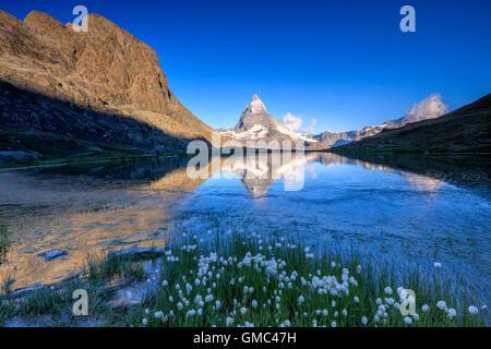 Cotton grass frame the Matterhorn reflected in Lake Stellisee at dawn Zermatt Canton of Valais Switzerland Europe - Stock Photo