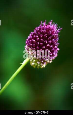 Plants and flowers, caribbean asian - Stock Photo