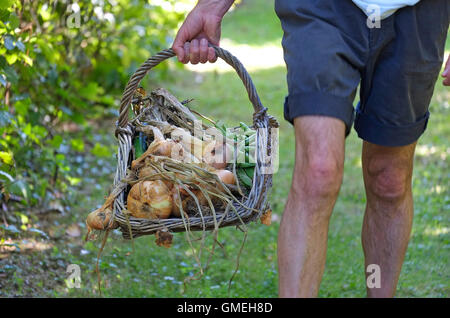 mature male gardener holding wicker basket - Stock Photo