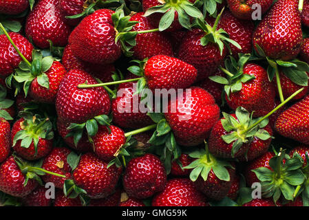 Freshly harvested ripe strawberries, top view - Stock Photo