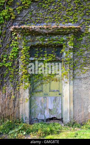 vegetation and ivy growing over empty hall near leeds yorkshire uk - Stock Photo
