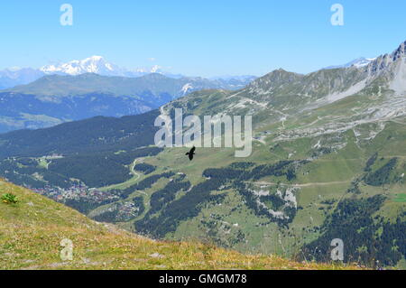 A large black bird in flight over the Meribel Valley, French Alps, France.  Mountains, snow, green pasture, altitude, - Stock Photo