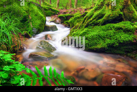 Closeup of a small forest brook, the clear water gently flowing through moss covered forest ground - Stock Photo