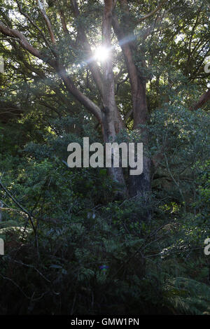 The sun shines through trees on the Two Valley Trail next to Wolli Creek in Sydney, Australia. - Stock Photo