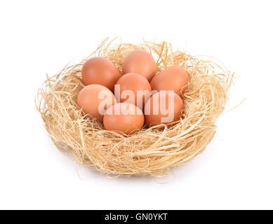 eggs in a nest on white background - Stock Photo