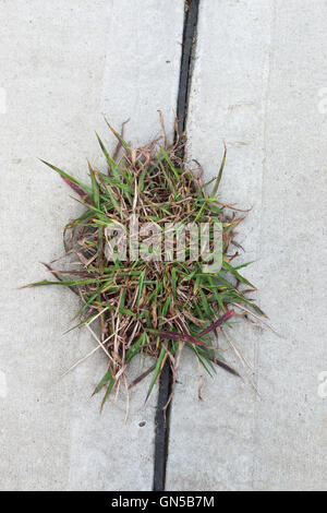 Grass growing in between gaps in concrete ground - Stock Photo