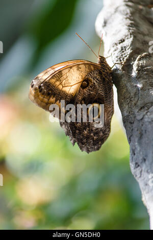 Portrait of a butterfly posing on a rock - Stock Photo
