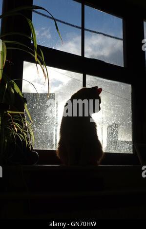 Ginger cat and rainy window - Stock Photo