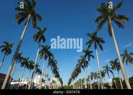 LINES OF TALL PALM TREES ROYAL POINCIANA WAY PALM BEACH FLORIDA USA - Stock Photo