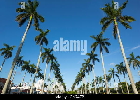LINES OF TALL PALM TREES ROYAL POINCIANA WAY PALM BEACH FLORIDA USA - Stock Photo