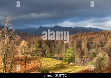 Tarn Hows with the Landgale Pikes in the distance, Lake District National Park, Cumbria, England UK - Stock Photo