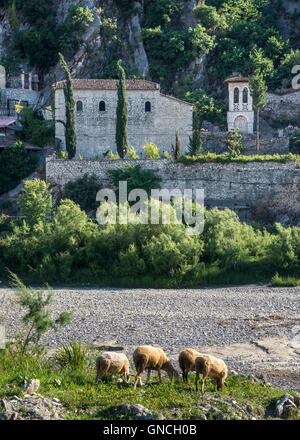 Sheep grazing on the banks of  Osumi river with St. Thoma church in the background, Gorica, Berat, central Albania. - Stock Photo
