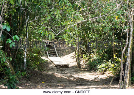 A path towards old muddy wooden stairs in the middle of Tambopata Reserve, near Lake Sandoval, Amazon rainforest, - Stock Photo