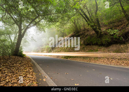 Car light trails in the foggy forest, Anaga, tenerife, Canary island, Spain. - Stock Photo