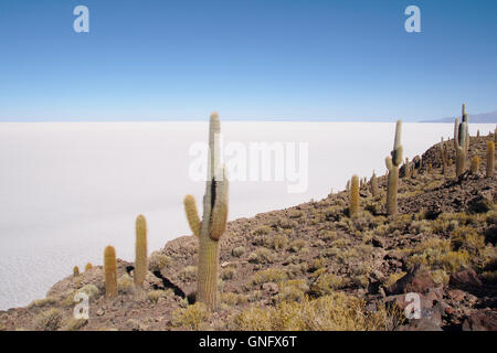Cacti (Trichocereus pasacana) on Isla Incahuasi with Salar de Uyuni, Bolivia - Stock Photo