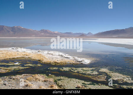 Laguna Blanca with ice sheet, Andes in Southwestern Bolivia - Stock Photo