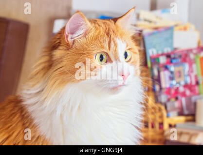 Nice adult goggle red cat with big eyes - Stock Photo