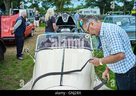 Two dogs in back seat of classic car on display at the Manx Festival of Motorcyling 2016 - Stock Photo