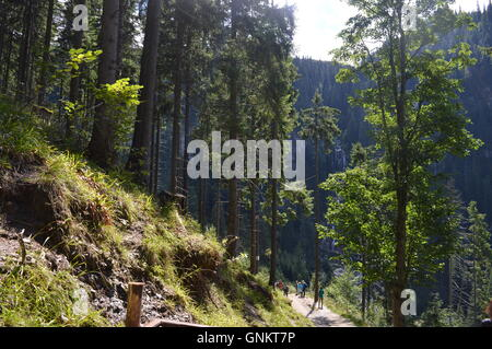 The path through a forest to a waterfall - Stock Photo