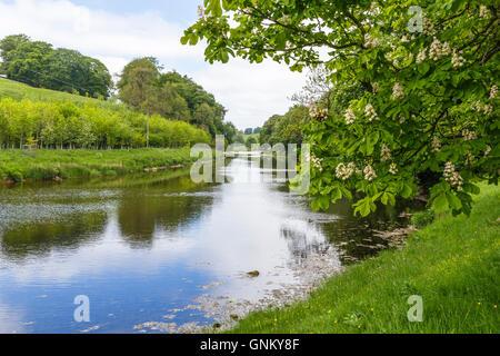 River Wharfe, near Hebden, Yorkshire. - Stock Photo