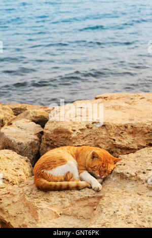 portrait of a sleeping ginger cat on the rocks at Ayia Napa harbour, Cyprus. - Stock Photo