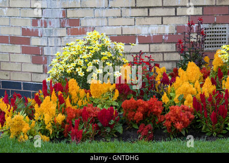 colorful display of garden flowers - Stock Photo
