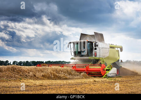 Working Harvesting Combine in the Field of Wheat. - Stock Photo