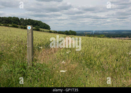 Footpath sign and path cut through stages of a winter wheat field on the North Wessex Downs in July - Stock Photo