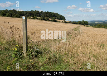 Footpath sign and path cut through stages of a winter wheat field stubble on the North Wessex Downs in late August - Stock Photo