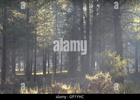 Smog from distant forest fire in Arizona Kaibab Forest near the Grand Canyon.USA - Stock Photo