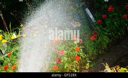 Bilder aus idyllischen Kleingärten und Schrebergärten in Polen - Stock Photo