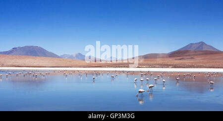 pink flamingos in Bolivia, nature and wildlife, beautiful landscape with mountain lake and birds - Stock Photo