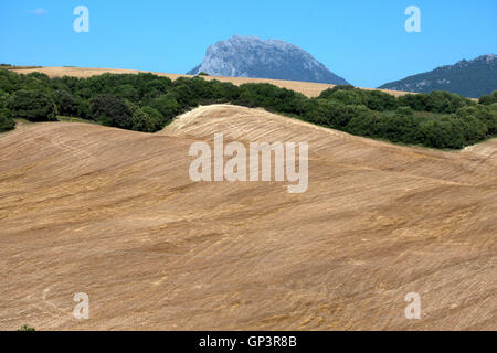 A field desertified and deforested for monoculture in Prado del Rey, Sierra de Cadiz, Andalusia, Spain - Stock Photo