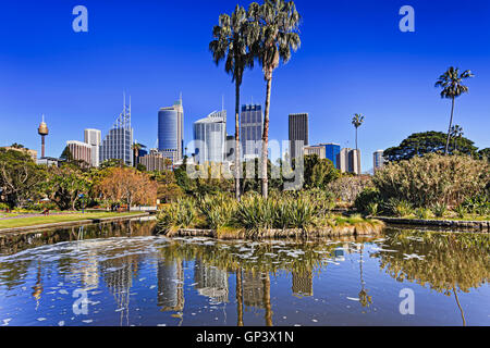 Royal Botanic Garden pond in Sydney with city CBD in a background on horizon reflecting in water. Palm trees and - Stock Photo