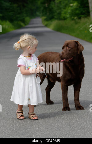 Little girl, two years old, going for a walk with a dog, brown Labrador Retriever, Germany - Stock Photo