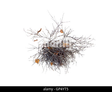pathological growth of branches on a tree isolated - Stock Photo