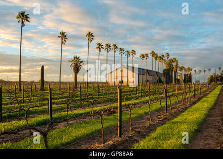 A Tanunda winery and vineyard at sunset in the Barossa Valley Australia - Stock Photo