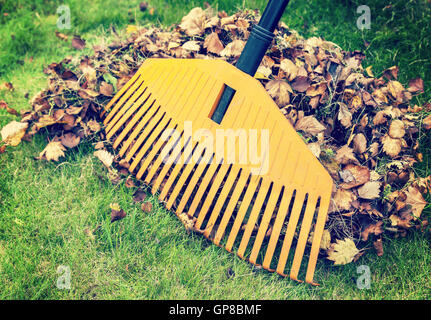 Pile of fall leaves with rake on green lawn - Stock Photo