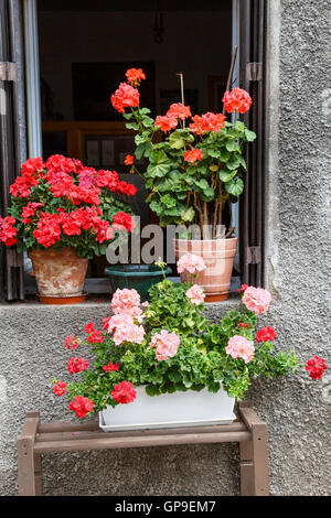 Potted geraniums in the window of a French house at Olliergues in the Auvergne. - Stock Photo