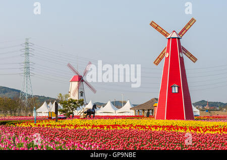 colorful tulips and wooden windmills in the park,South Korea. - Stock Photo