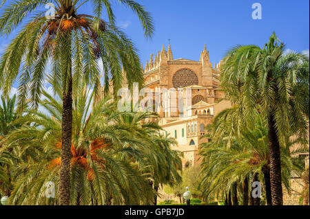 La Seu, the medieval gothic cathedral of Palma de Mallorca, in the palm tree garden, Spain - Stock Photo