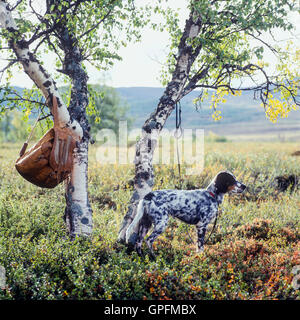 Grouse shooting in Sweden - Stock Photo