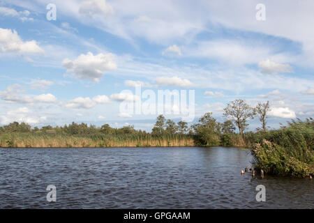 Blue sky over a Dutch polder with reeds and trees - Stock Photo