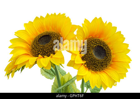 Yellow flower agricultural plants used to make cooking oil - Stock Photo