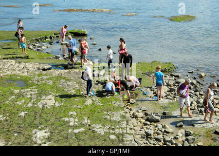 Families rock pooling and fossil hunting on the waterfront shore  at Lyme Regis on the Dorset coast in England UK - Stock Photo