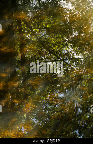 Autumn leaves and trees reflected in water, Knettishall Heath, Suffolk, England, UK - Stock Photo